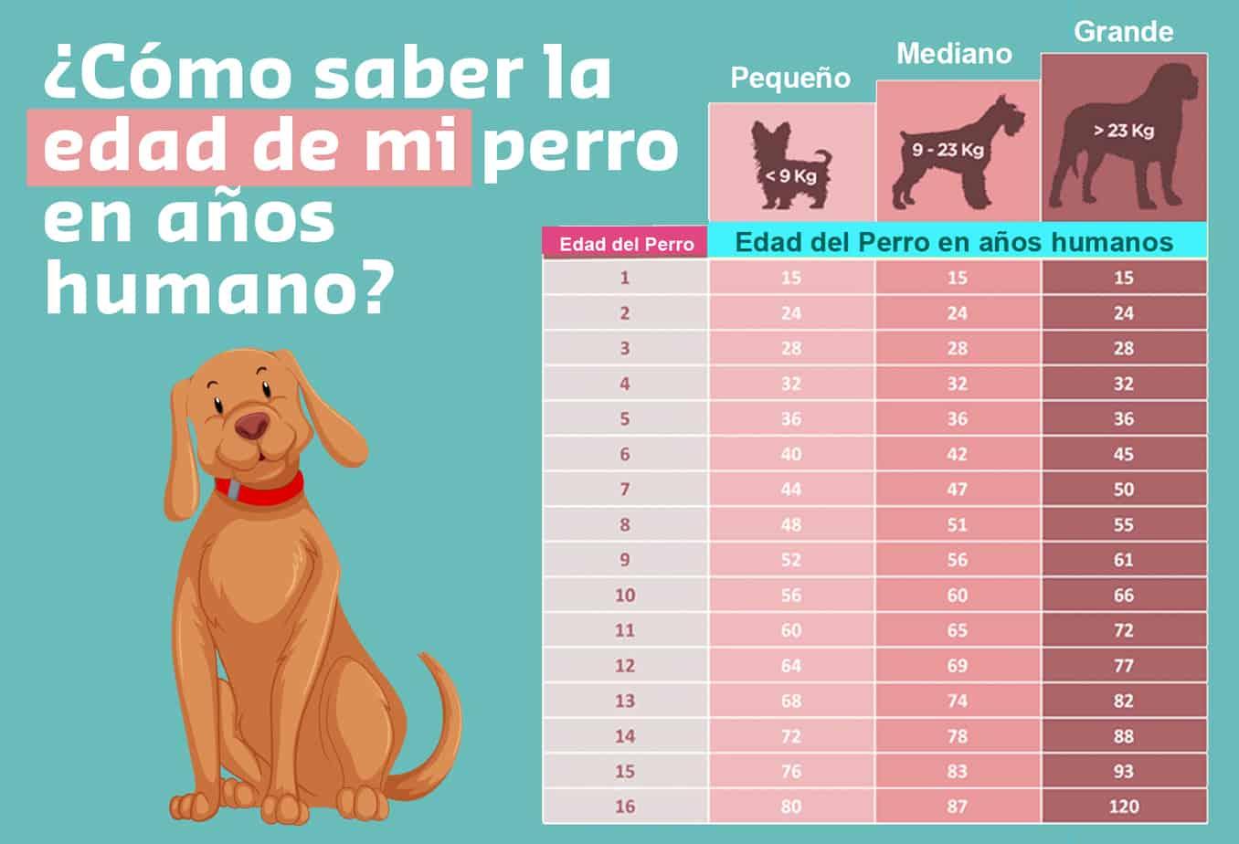 Cómo saber la edad de un Perro