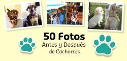 50 Fotos del Antes y Después de Cachorros